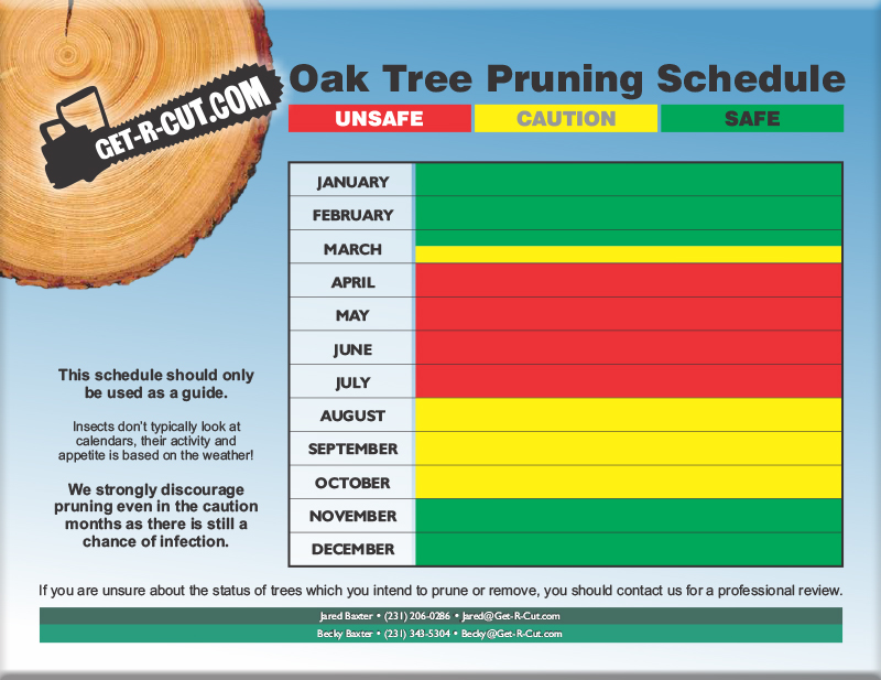 Oak Tree Pruning Calendar for Spring Lake, Grand Haven & Muskegon