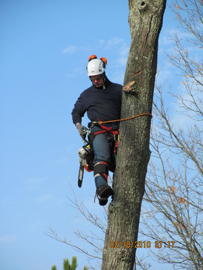Trained Tree Removal Experts in Spring Lake